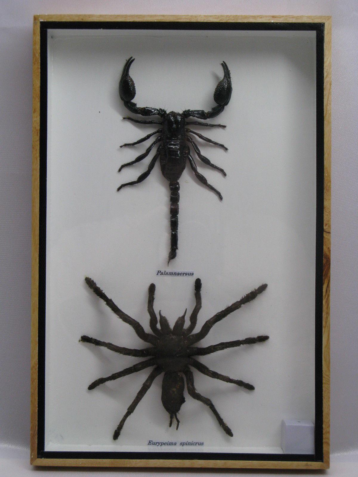 Präparierte Insekten